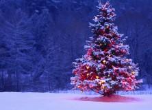 Carols Around the Christmas Tree – Sunday 16th December at 4pm